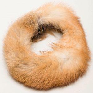 Pandebånd rød ræv