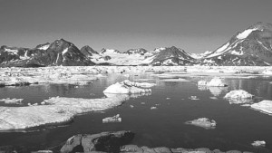 Grønlandsk sæl